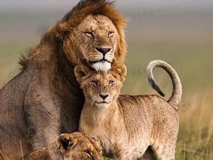 Masai Mara National Reserve Safari Fotos