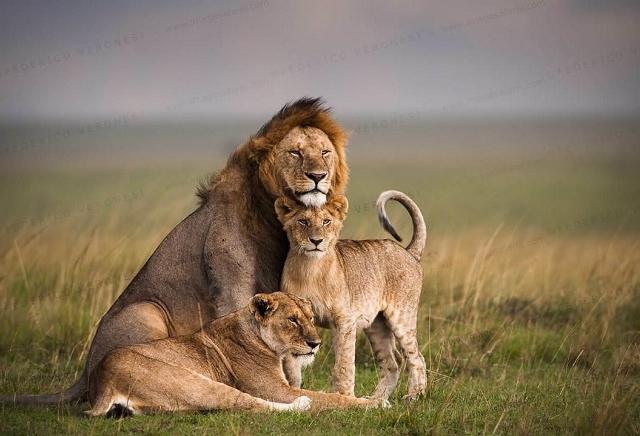 Masai Mara National Reserve Safari Photos