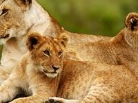 3 Days 2 Nights Masai Mara Safari