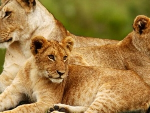 3 Days 2 Nights Masai Mara Safari