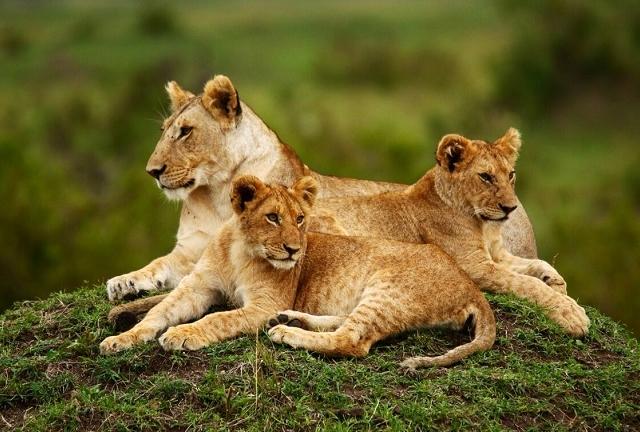 3 Days 2 Nights Masai Mara Safari Photos