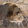 2 Day Tanzania Lodge Safari