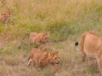 Mashujaa Day - 1 Night 2 Days Masai Mara