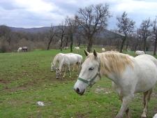 Lipica Stud Farm 4