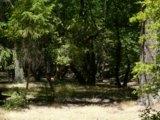 Poco Campground Doe