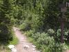 Little Golden Forest Trail