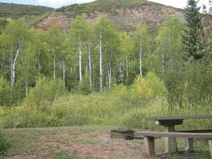 North Little Campground Tenedor