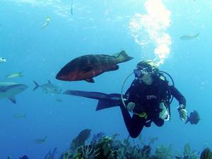 Liveaboard Diving Trip - Komodo Indonesia