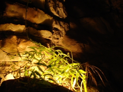 Living Plant In The Cave