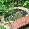 Lodz Palm House