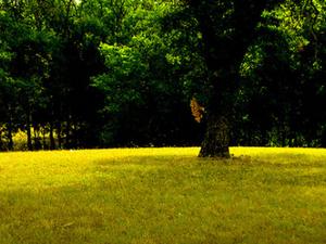 Lofers Bend Park