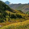 Logan Pass Wildflower Hillside MT