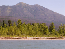 Logging Mountain - Glacier - USA