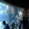 Long Beach Aquarium Of The Pacific