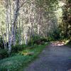 Lost Man Creek Trail