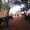 Louisa Point Pony Stands - Matheran - Maharashtra - India