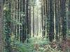 Lowden-Miller State Forest