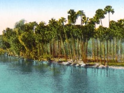 Lowlands  Along The  St .  Johns  River
