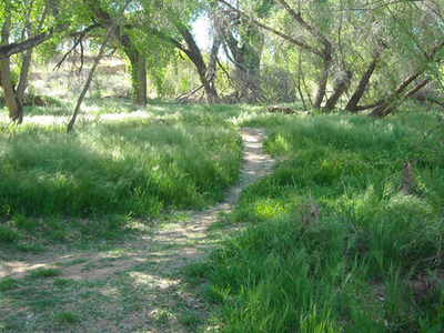 Lush Green Area In The Vicinity Of The Picnic Area