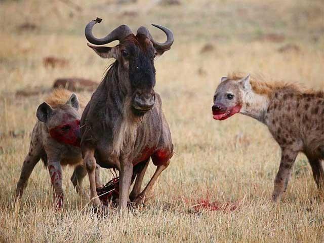 Safari in Northern Circuit of Tanzania Photos