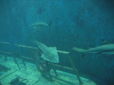 The Wreckage Of Sharks