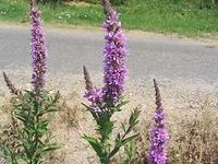 Canebrake Ecological Reserve
