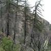 Lytle Creek California