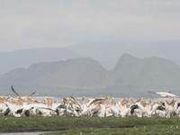 Soysambu Conservancy