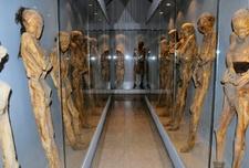 Several Mummies