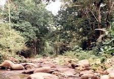 River Ocumare At Level Of La Trilla