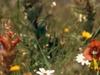 Lourensford Alluvium Fynbos