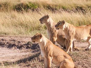 Maasai Mara Budget Joining Safari