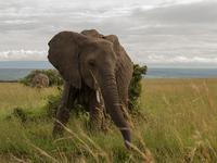 4 Days Maasai Mara Camping Migration Safari