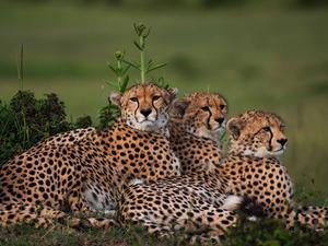Masai Mara Budget Camping Safari Photos