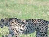 13 Days Kenya & Tanzania Exciting Adventure Camping Safari