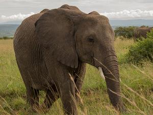 Jivinjari Kenya!