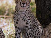 Maasai Mara, Nakuru, Naivasha- 6 Nights / 7 Days