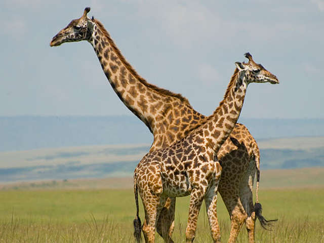 Maasai Mara Adventure 3 Days