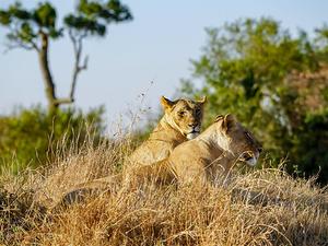 3 Day 2 Nights Group Joining Safari Photos