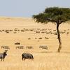Maasai Mara Plains