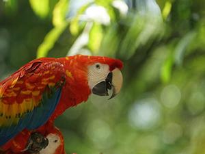 Amazon Rainforest 4 Days Photos
