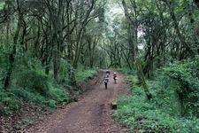 Machame Route View - Trekking Kilimanjaro