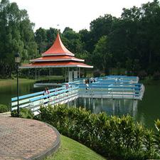 Macritchie Forest Trails ,Singapore