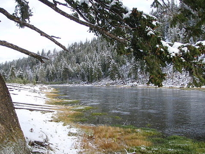 Madison River - Angling - Yellowstone - Wyoming - USA