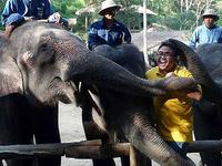 El campamento de elefantes Sa