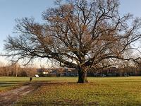 Cannon Hill Common