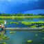 Majuli Isla