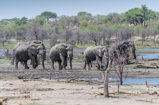 13 Days Elephant Trail - Botswana Photos