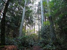 Makomako Hut To Maungapohatu Track - Te Urewera National Park - New Zealand