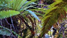 Makomako Hut To Rua's Track - Te Urewera National Park - New Zealand